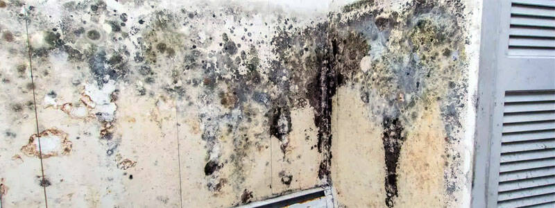 Избавляемся от грибка на стенах самостоятельно