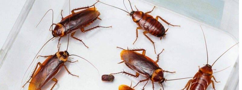 Избавляемся от тараканов в частном доме