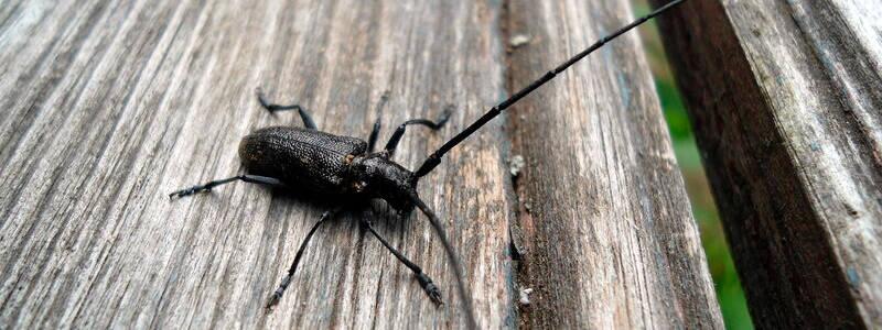 Способы борьбы с жуками в доме: эффективные и неэффективные