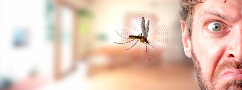 Средства борьбы с комарами: эффективные и неэффективные