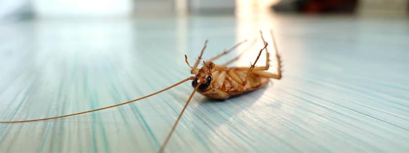 Уничтожение тараканов: главные способы борьбы с насекомыми