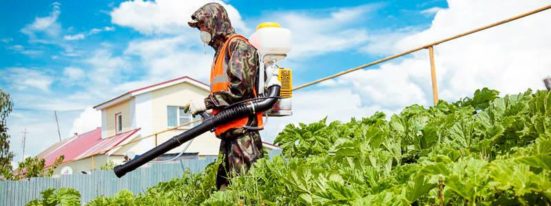 Уничтожение сорняков: гербицидная обработка